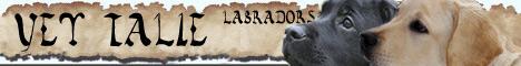 Labradors kennel